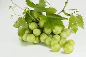 grapes-582207_1920